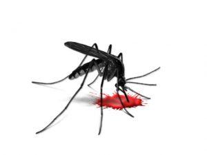 Dengue Fever Crack