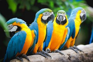 Macaw Crack